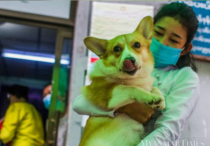 Yangon's Sanchaung township launches digital pet registration